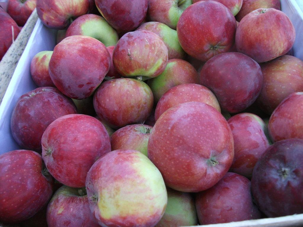 традиции канун яблоня шафран саратовский описание фото еще раз