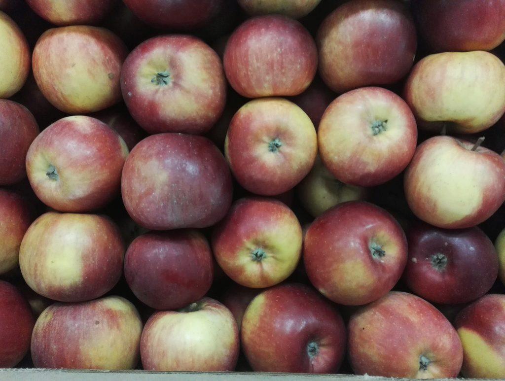 своё сорта яблок для беларуси в картинках один непрофильных